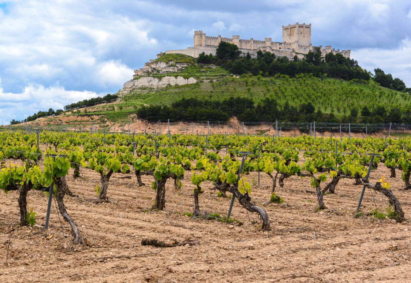 Penafiel-Castle-Vineyard